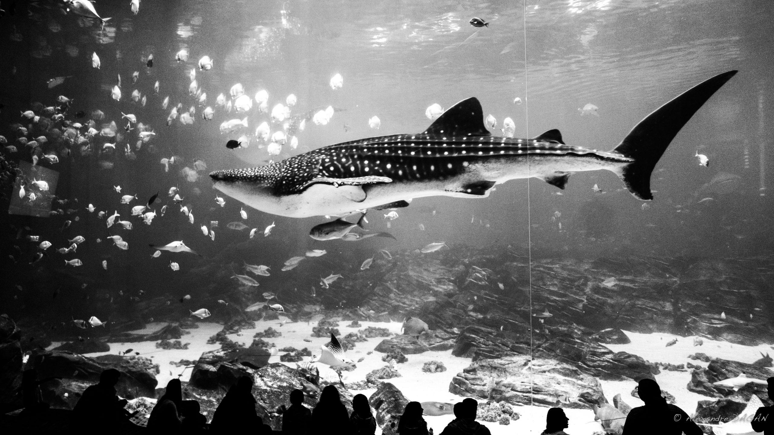Georgia Aquarium, Atlanta, Georgia, United States